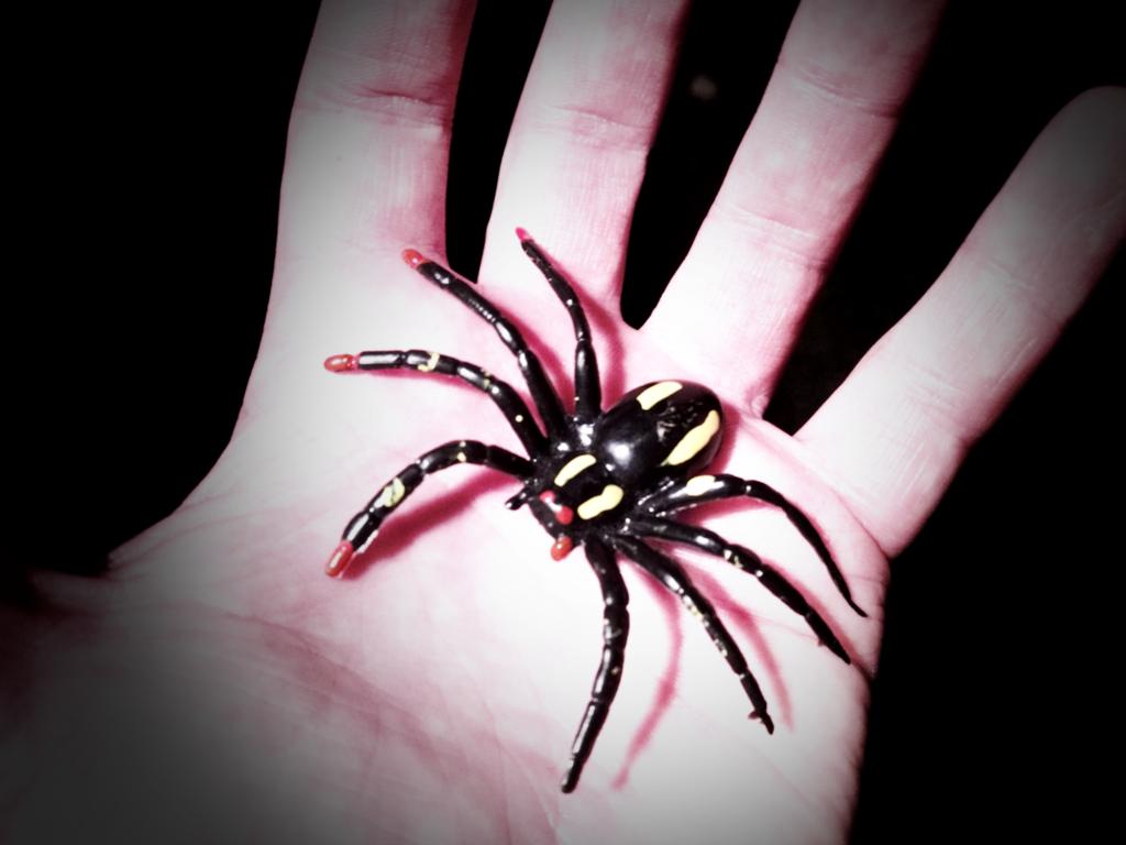 die schwarze spinne